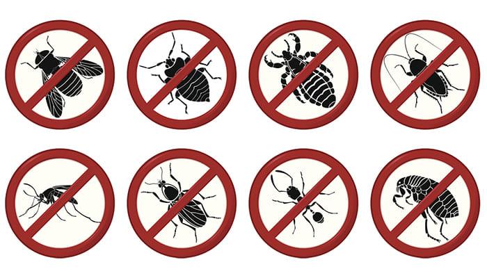эффективные средства от насекомых